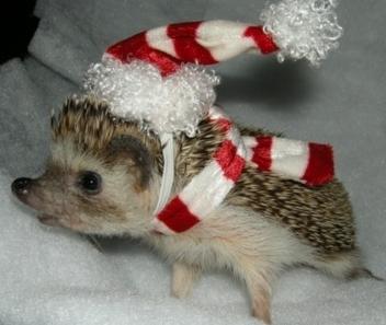 cute-lil-hedgehog2.png